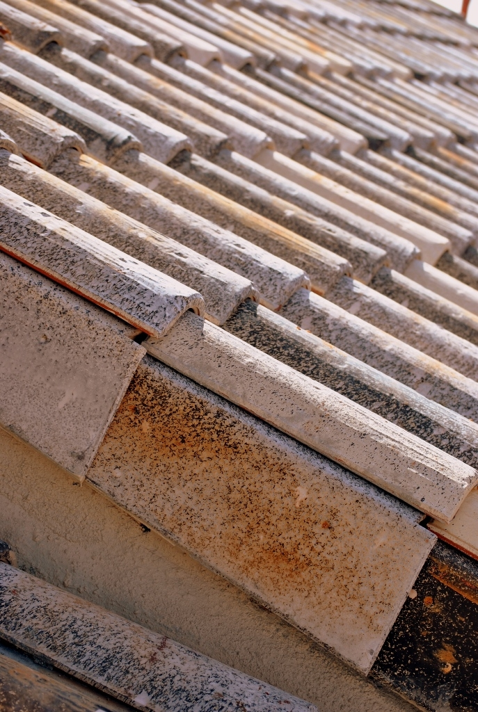 TB1220CENT20MEDITERRANEA-ILLESCAS-TOLEDO2010.jpg