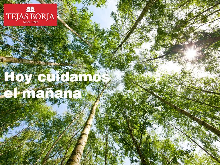 Política de Calidad y Medio Ambiente | Tejas Borja